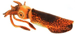 Peluche de Calamar naranja de 80 cm - Los mejores peluches de calamares - Peluches de animales